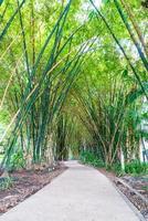 gångväg med bambuträdgård i park foto