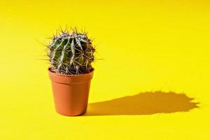 kaktus i en blomkruka på en gul bakgrund foto