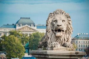lejonstaty vid kedjebron, Budapest, Ungern foto
