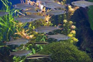 fiskar i akvariet foto