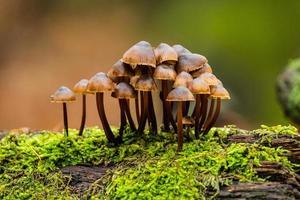 närbild av svampar i skogen foto