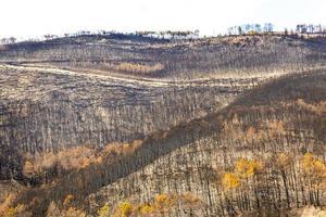 toskanska berget förstört av en eld foto