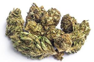 lagliga marijuana blommor på enkel bakgrund foto