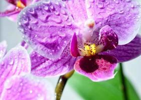 rosa orkidéblommor foto