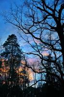träd i naturen i park foto