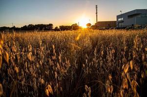 dike gräs vid solnedgången i en orange färg foto
