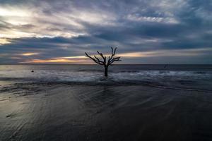 vacker natur på jaktön South Carolina foto