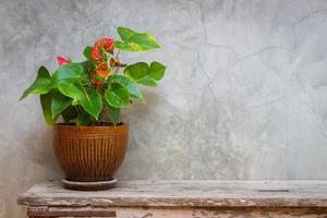 snörblad i blomkruka på träbakgrundsstruktur med rymdkopia foto