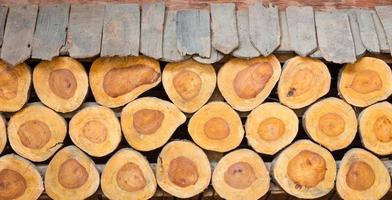 bakgrund av tvärsnitt av trädstammar, används som vägg foto