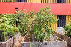 många växter växer i vårgatan gemenskapsträdgård foto