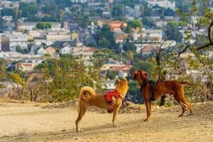 två hundar tittade på staden foto