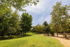 träd, äng i naturparken vista hermosa foto