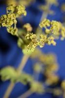 blomma blomma närbild högkvalitativa storstorlekstryck foto