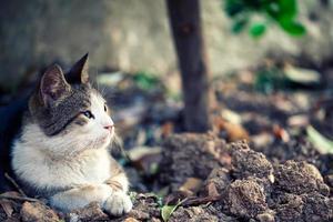 söta djur husdjur katt foto