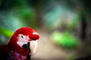 djurfågel papegoja med färgglada fjädrar foto