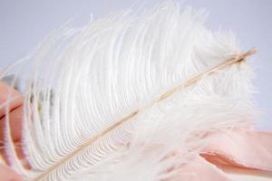 vit strutsfjäder på rosa bakgrund. mors dag gratulationskort. foto