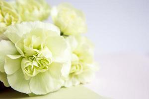 gröna gula nejlikor på vitt. plats för text. gratulationskort. foto