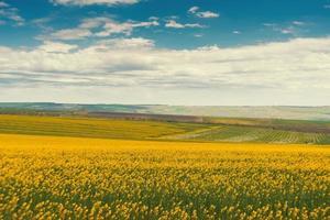 landskap av vackert blommande våldtäktsfält på äng över molnig himmel foto