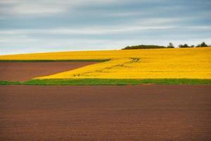 foto av rappfält under vårdag, jordbruk och gårdskoncept