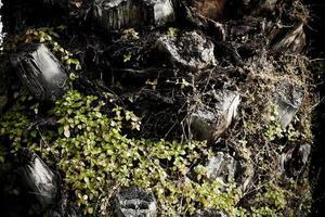 tropisk växt palmkropp foto