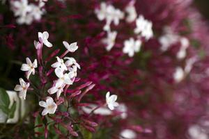 romantisk naturlig flora lila blommor foto