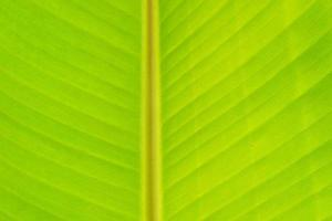 närbild banan blad bakgrund konsistens foto