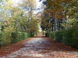 romantisk promenad bland torra löv på hösten foto