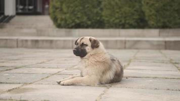 hund som ligger på marken foto