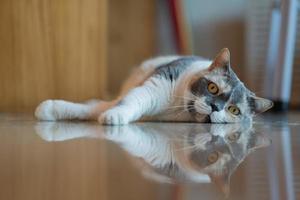 närbild skott av en katt på marken, husdjur foto