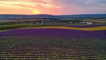 flygfoto över lavendelfältet i strålarna från en vacker solnedgång. foto