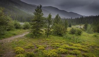 vildblomma äng på landsbygden colorado på en stormig dag foto
