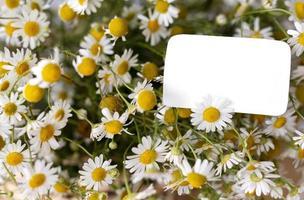 den vackra naturliga blommebuketten foto