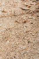 sågspån på marken foto