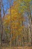 höstfärger i understory av avlägsen skog foto