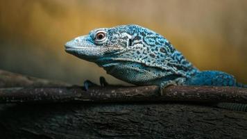 blå fläckig trädmonitor foto