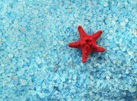 en röd sjöstjärna på blå salt bakgrund foto