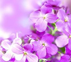 vackra lila blommor på bokeh bakgrund. vårblomma foto