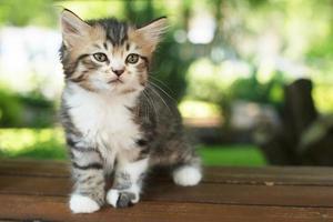 söt kattunge i parken på en bänk, på sommaren foto