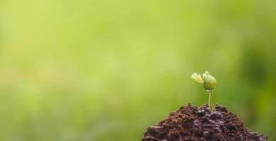 ung växt som växer i trädgården foto