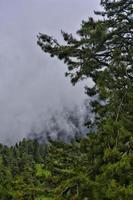 dimmig morgon i skogen foto