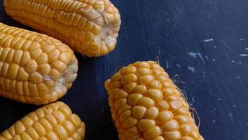 detta foto av ung söt majs i gult på en svart bakgrund