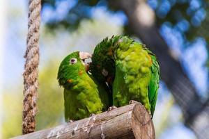 Utomhus papegoja i en park i Rio de Janeiro, Brasilien. foto