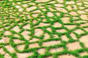 vacker ljusgrön gräsmatta i höstparken foto