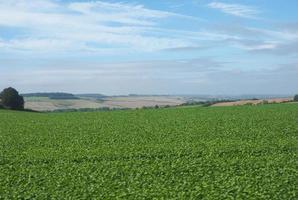 engelskt landspanorama i Salisbury foto