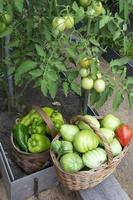 tomater och paprika i flätade korgar närbild foto