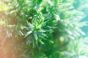 växt med dagg som bakgrund tidigt på morgonen. solig dag koncept. foto