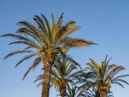 perfekta palmer mot en vacker blå himmel. natur tropiska träd foto