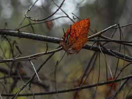 höst vissnat torrt gult blad på en trädgren foto
