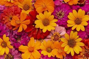 det underbara arrangemanget blommor tapet foto