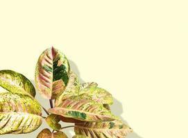 trädgård croton växt foto
